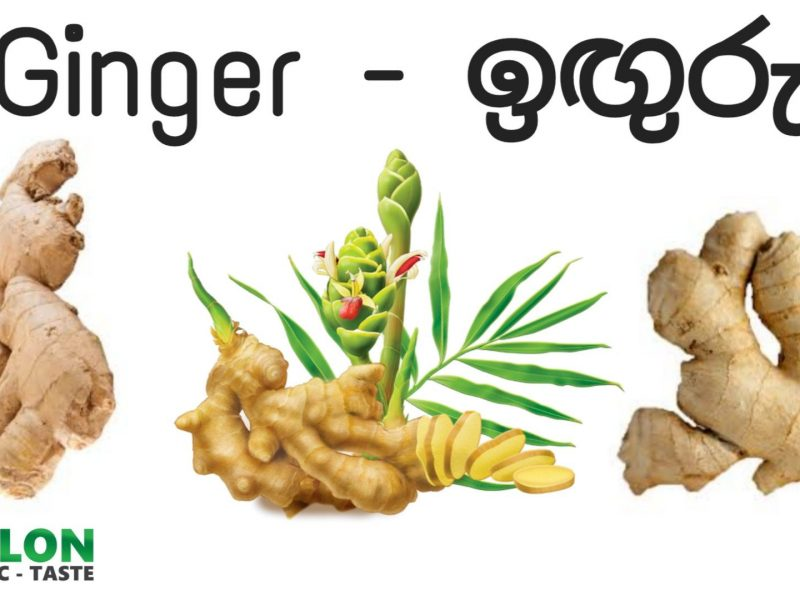 7 Benefits of Ginger