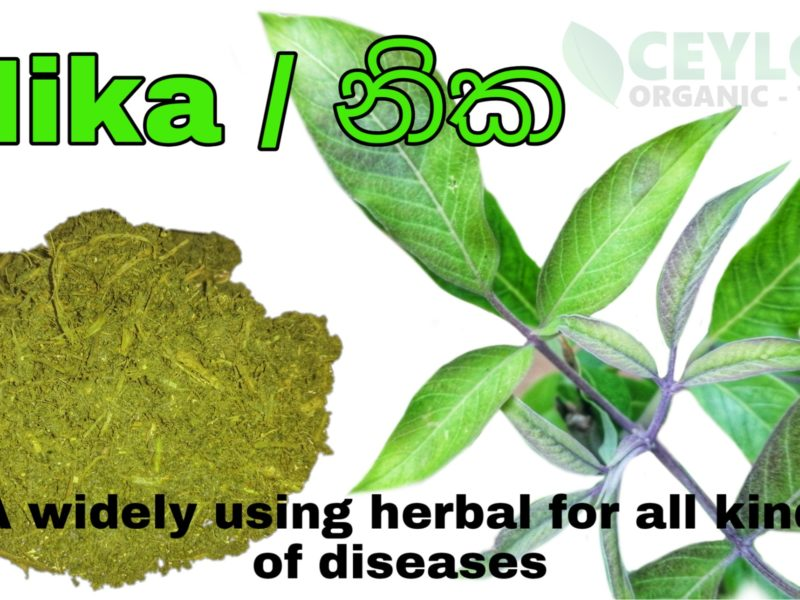 Nika – A widely used Valuable natural herb in Indigenous Medicine