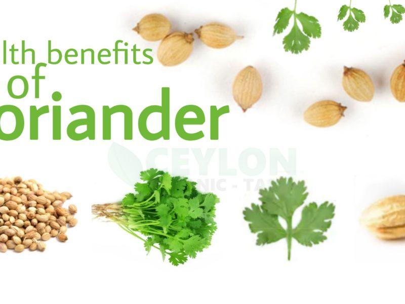 Coriander – Best Immunity Boosting Medicine