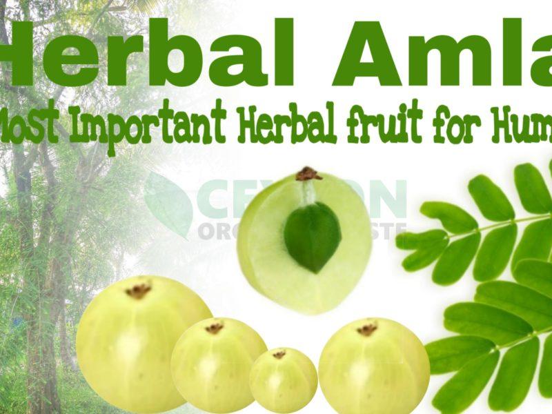 Herbal Amla – Important Herbal Fruit for humans