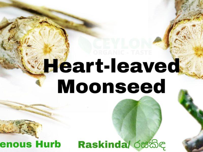 Tinospora cordifolia / Heart-leaved moonseed/ Rasakinda – A Important natural herb for the human body