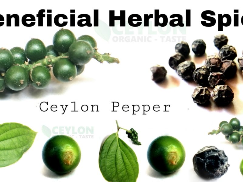 Pepper Benefits – Herbal Spice with many medicinal properties