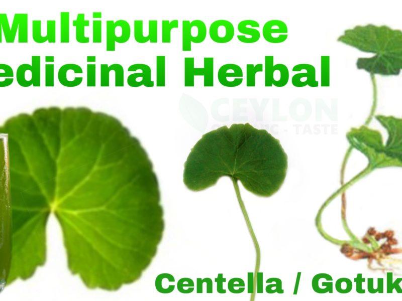 Multipurpose Medicinal Herbal – Centella Gotukola