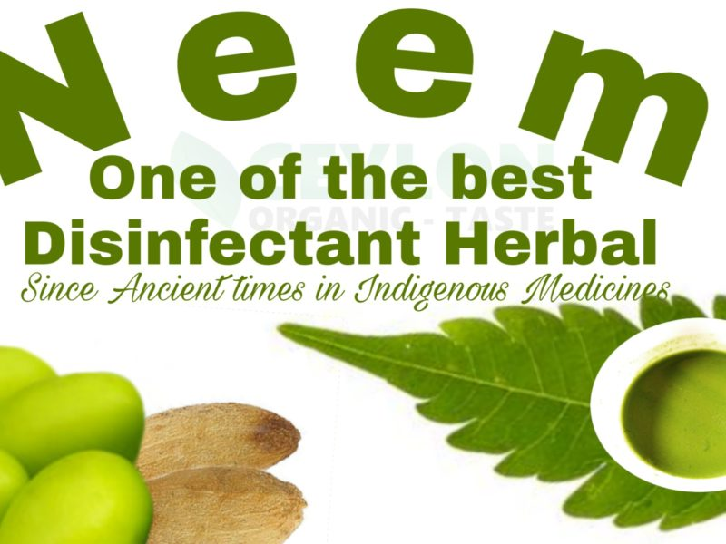 Neem – One of the best disinfectant herbal