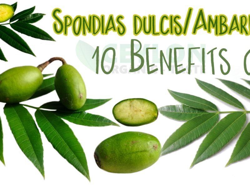 10 Benefits of Spondias dulcis/ Ambarella – Medicinal Fruit