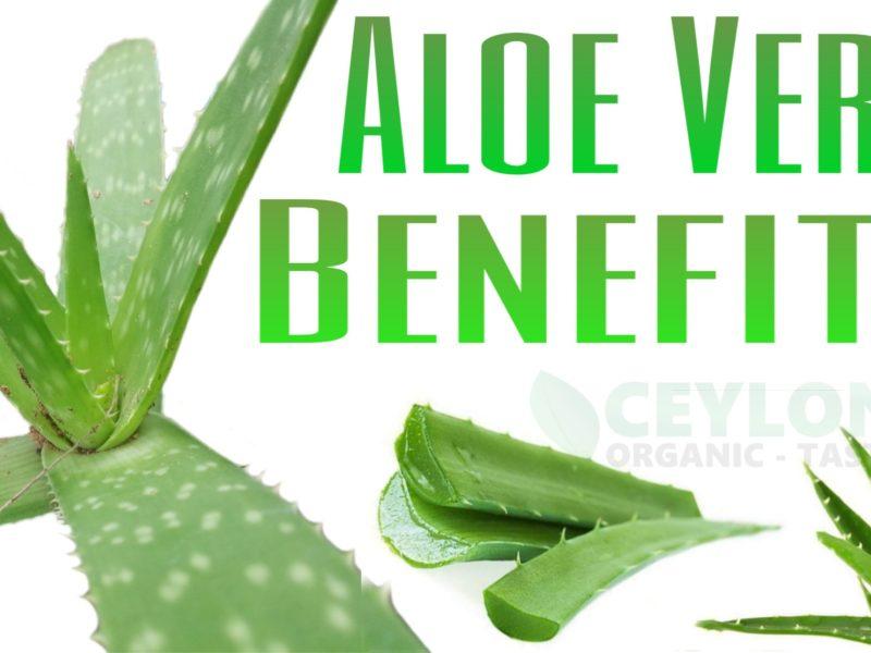 15 Natural Benefits of Aloe-Vera