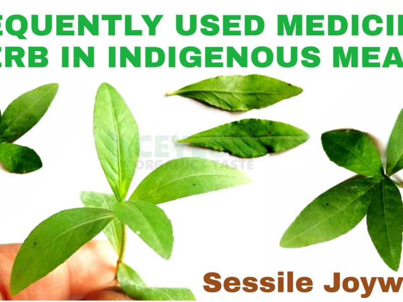 Sessile Joyweed – Frequently used medicinal herb in indigenous meals