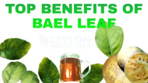 Top Benefits of Bael leaf - ceylonorganictaste