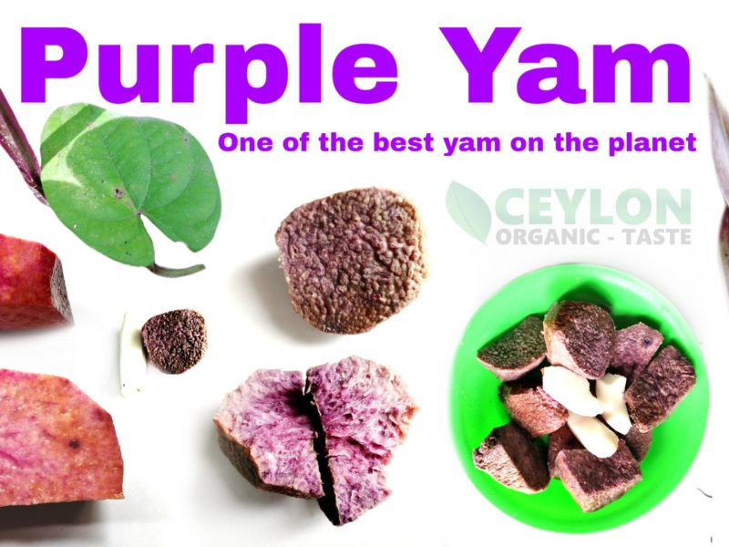 Purple Yam – One of the best yam on planet